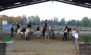 centre equestre les fedies_4